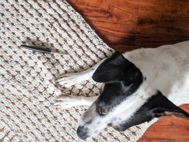 dog with poncho